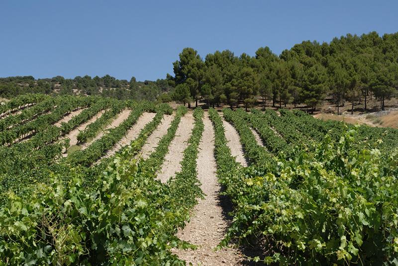 9 razones Win para amar la uva
